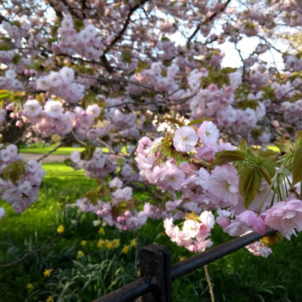 Eating with the Seasons: Spring
